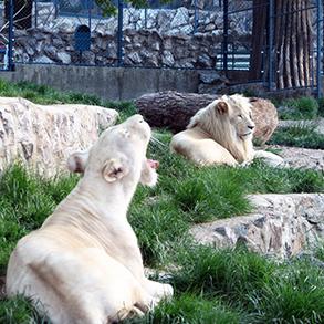 Concierge Belgrade | Beogradski Zoolški vrt